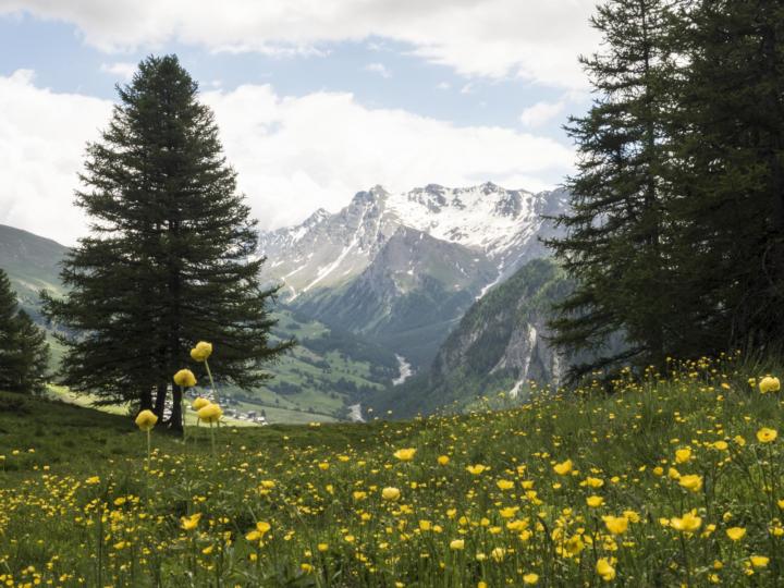 Prochainement : une randonnée florale & aromathérapie dans le Queyras avec Claudie Bourry