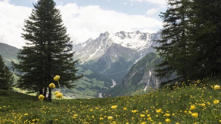 randonnée florale & aromathérapie dans le Queyras avec Claudie Bourry