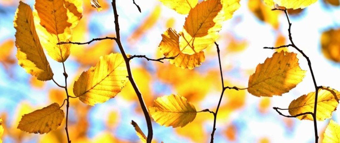 Un nouveau format de newsletter pour l'automne!