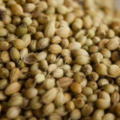 Huile essentielle de Coriandre graine propriétés, indications, précautions