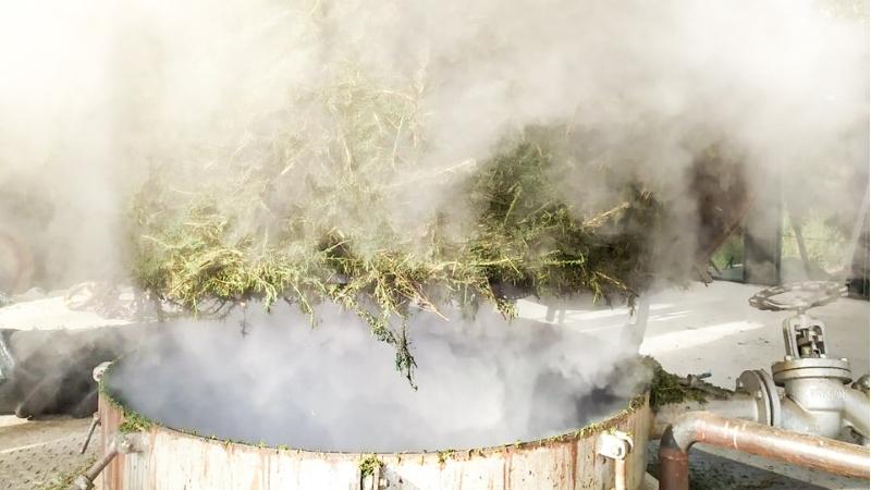 La Distillation du mois  : le Romarin Verbenone !