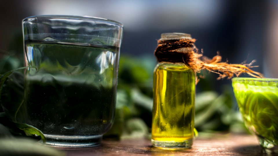 La news AromaGuide : l'huile essentielle de Tea Tree